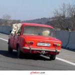 Recado Facebook O que? Um cavalo dentro do carro???