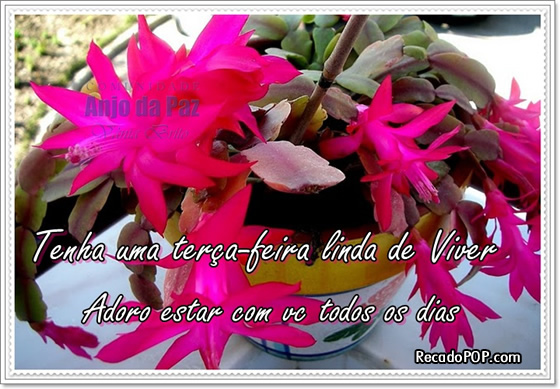 Recado Facebook Terça-feira Linda de Viver