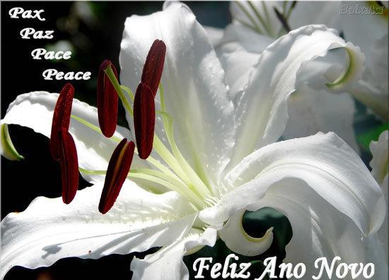 Recado Facebook Paz no Ano Novo