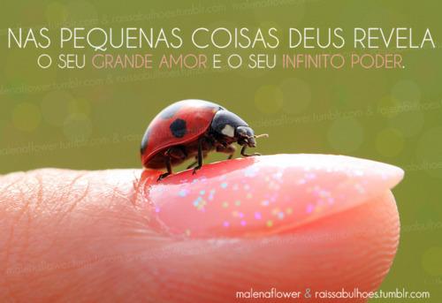 Recado Facebook Deus mostra seu amor e poder nas pequenas coisas