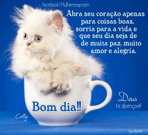 Recado Facebook Bom dia gatinho
