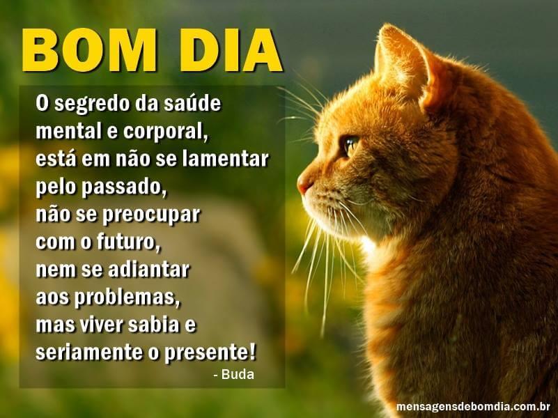 Recado Facebook O segredo da saúde é não se lamentar… Bom dia!